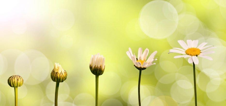 mindfulness behandeling praktijk relou